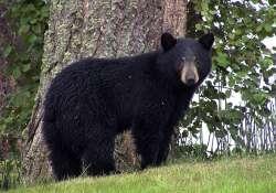 Fekete medvék érkeztek a veszprémi állatkertbe