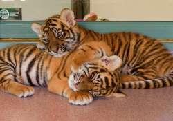 Folyamatos baby boom a veszprémi állatkertben
