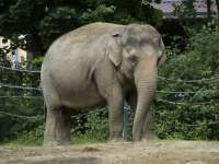 Veszprémben folytatódik az állatkert eddigi legjelentősebb fejlesztése