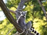 Újra látványetetések az állatkertben