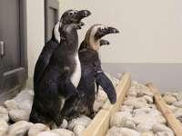 Fókák és pingvinek érkeztek a veszprémi állatkertbe